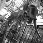 Que museos ver en Capital Federal