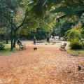 El Botanico de Buenos Aires