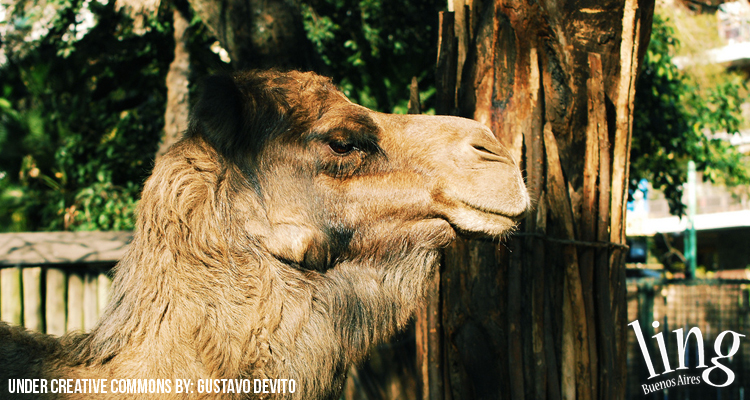 Visita al Zoológico de Buenos Aires